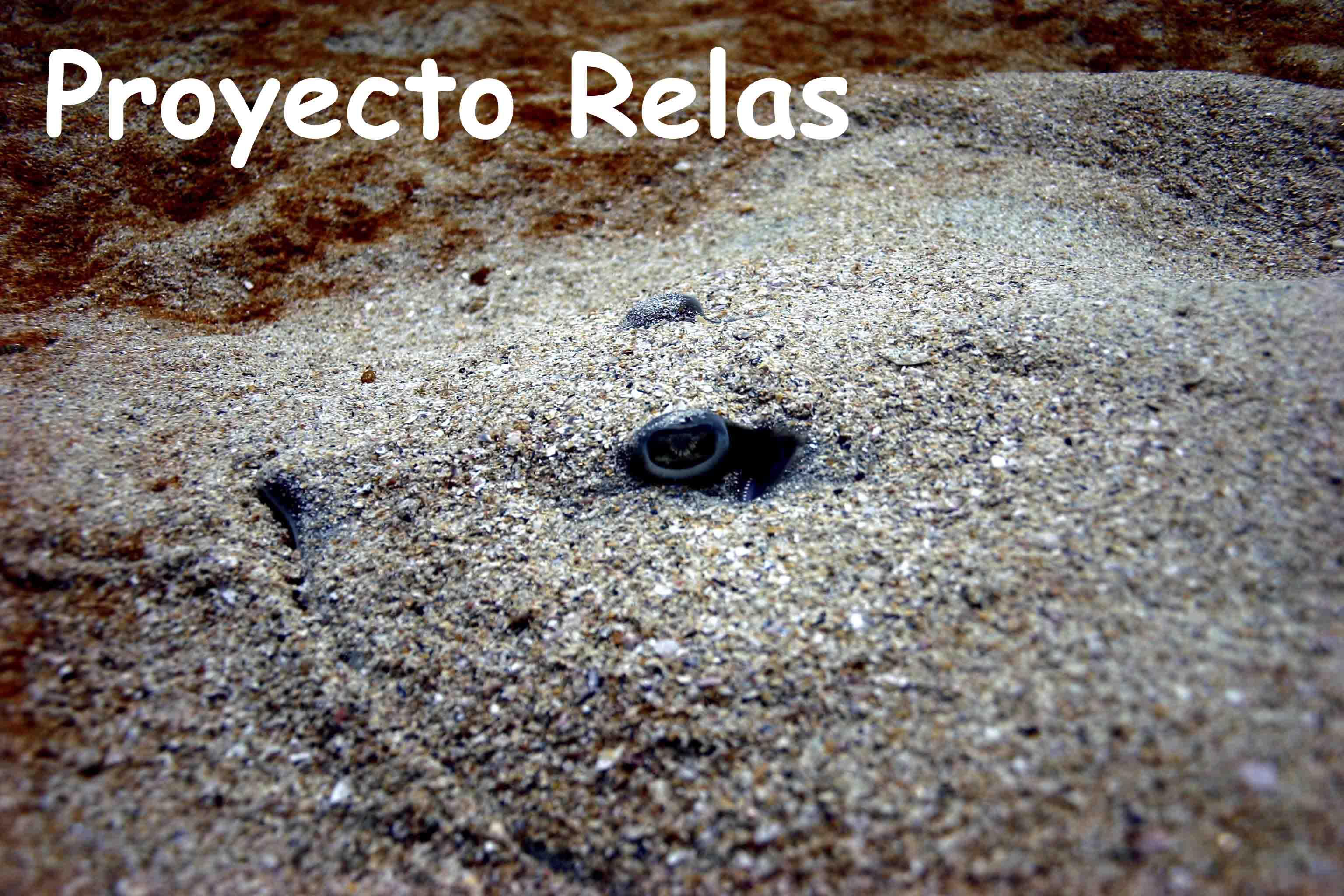 Proyecto RELAS